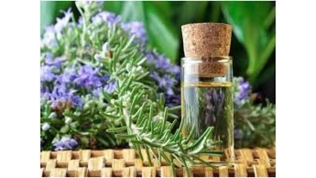 Dược tính tinh dầu hương thảo (Rosmarinus officinalis Linn)