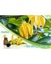 Tinh dầu ngọc lan tây: Đặc tính và công dụng