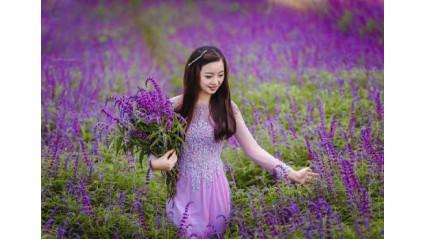 Tinh dầu Lavender! Hoa oải hương gợi nhớ câu chuyện thảo dược