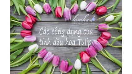 Tinh dầu hoa tulip